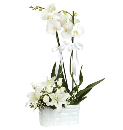 mor orkideler Orkide Lilyum Gül